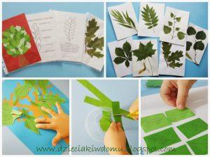 سرا آموزش کار دستی کودکان با برگ درختان19